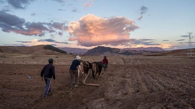 peruvian agriculture