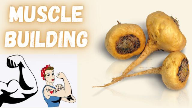 muscle building maca